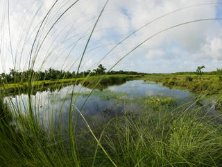 Fresh water marsh