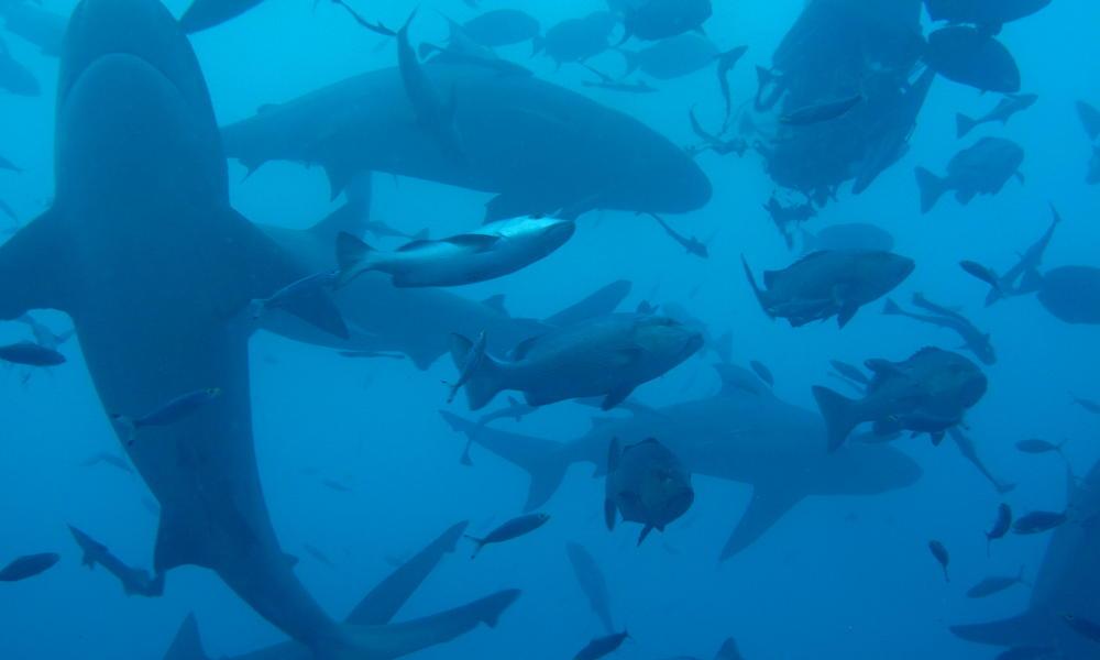 2560x1600 ocean sharks - photo #42