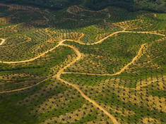 Forests threat palm oilxl 257598
