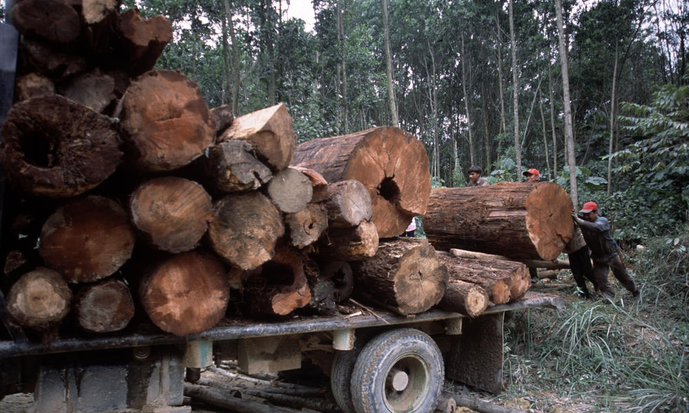 Illegal logging Riau, Sumatra | Photos | WWF