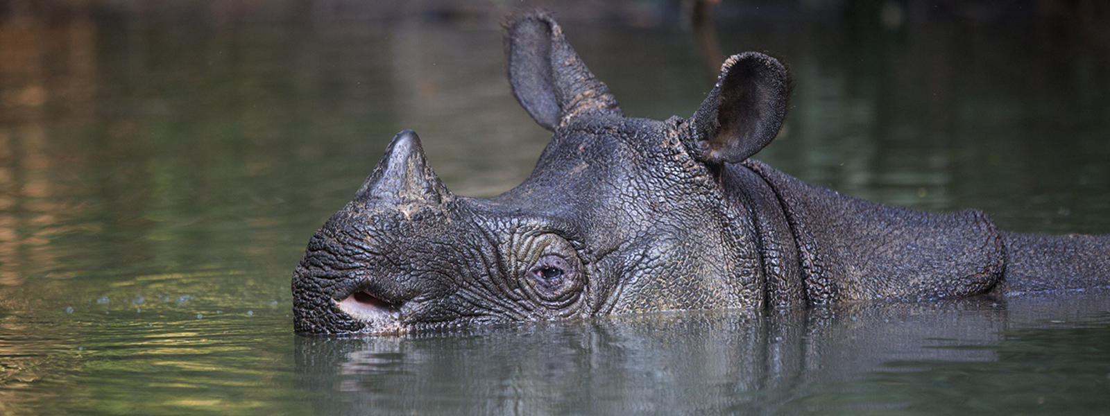 rare animals in the world with names