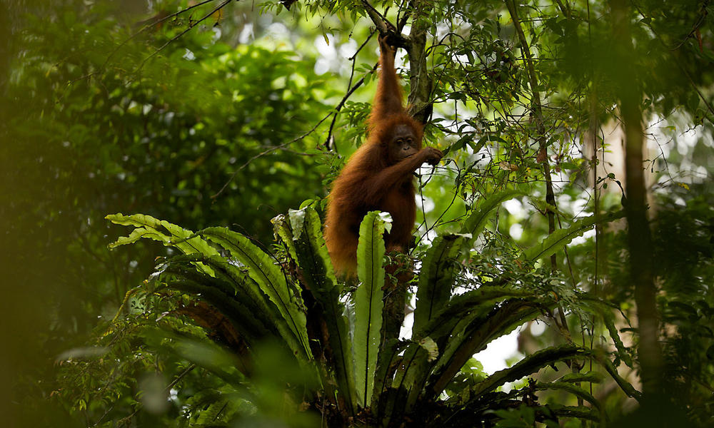 why should tropical rainforests be conserved Tropical rainforests are found between why are rainforests forests with the greatest variety of species or with rare species should be strictly conserved.