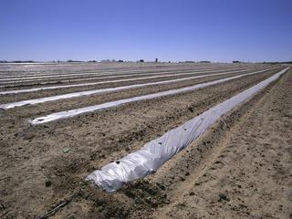 furrow farming in the desert