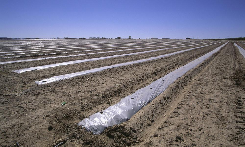 Rain-Fed Farms: Harnessing the Power of Precipitation