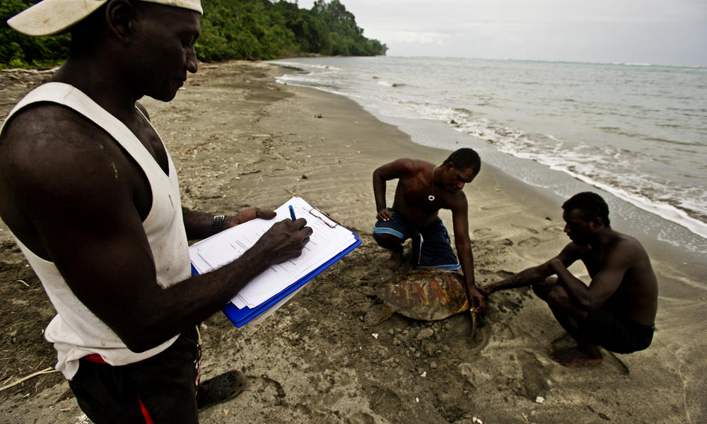 Coral Triangle turtle tagging
