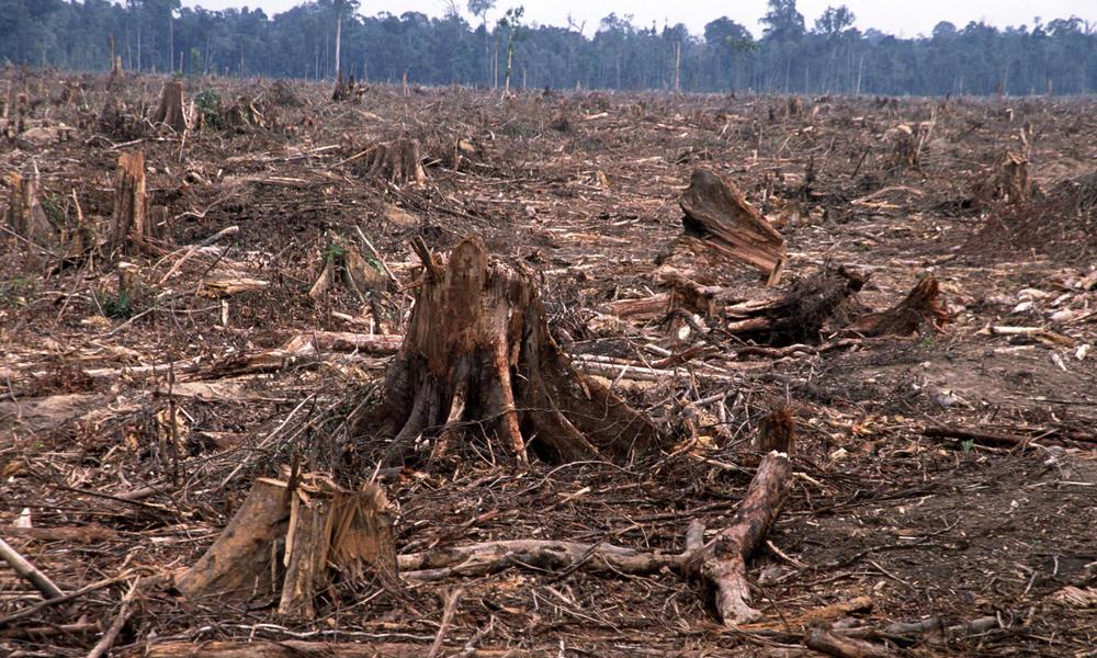 deforestation-causes-HI_104236.jpg (1000×600)