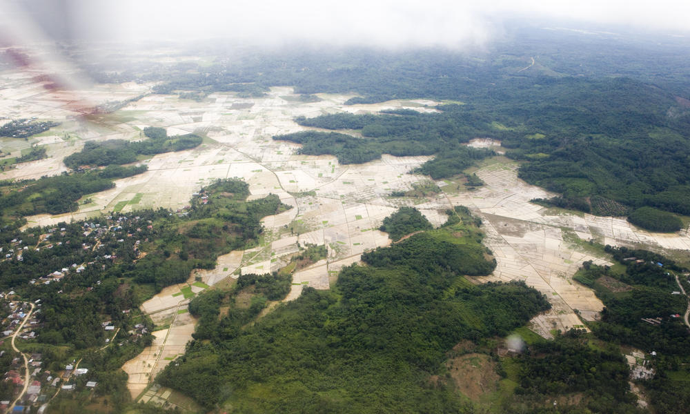 Deforestation in Borneo