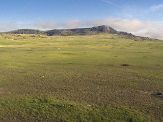aerial of prairie dogs in ngp