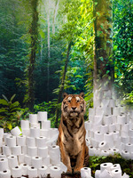 Don&#x27;t Flush Tiger Forests Brochure