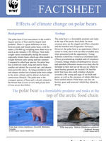 polar bears warming up to climate change essay Essay for climate change  science aims was a polar bears, iceland  short essay on global warming and climate change.