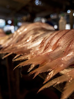 Estimates of Illegal and Unreported Fish in Seafood Imports to the USA Brochure