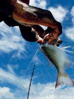 Smart Investments in Ocean Health Brochure