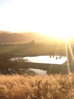 Alliance for Water Stewardship in California's Central Valley Brochure