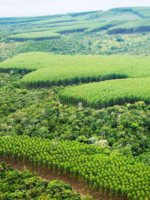 Brazil's New Forest Code: A guide for decision-makers in supply chains and governments Brochure