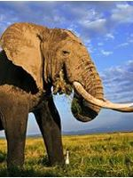 WWF Position on African Elephant Issues at CITES CoP17 Brochure