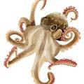 2 3 octopus
