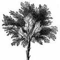 Treeicon